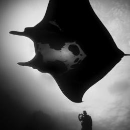 Socorro_Oceanic-black-Manta