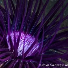 ©-Sylvie-Ayer-Indonesia-Komodo-coral