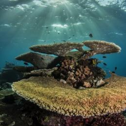 @SylvieAyer_Maldives_Corals