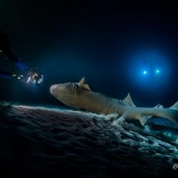 ©-Sylvie-Ayer-Maldives-nurse-shark-alimatha