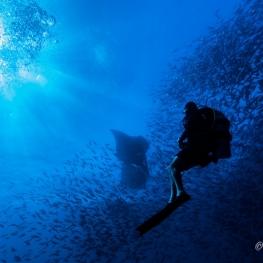 ©-Sylvie-Ayer-Maldives-reef-Manta-alfredi-diver