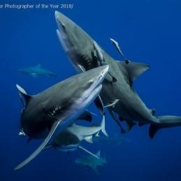 ©-Sylvie-Ayer-Mozambique-Bull-Shark-UPY-2018
