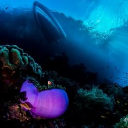 ©-Sylvie-Ayer-Indonesia-Raja-Ampat-anemonefish-fisheye