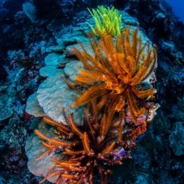 ©-Sylvie-Ayer-Indonesia-Raja-Ampat-corals-fisheye