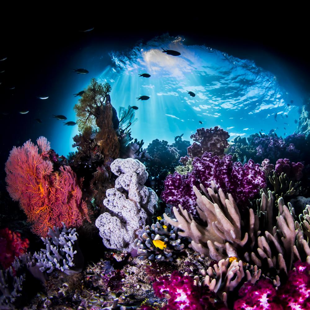 Top Dossier Corals