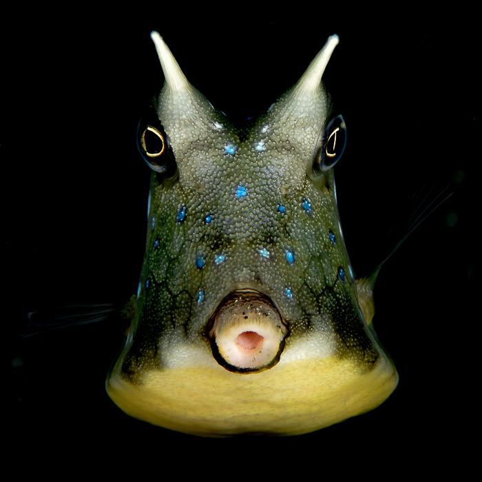 Top dossier poissons + macro EN